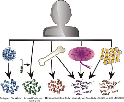 様々な組織からなる幹細胞