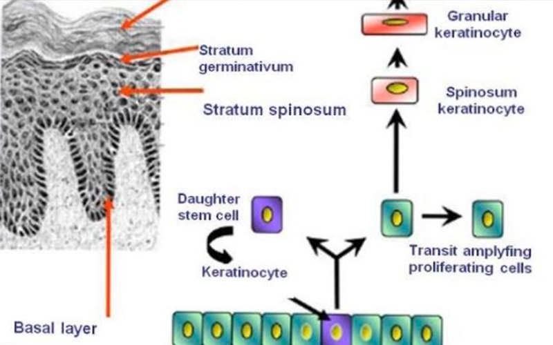 幹細胞治療、症例写真